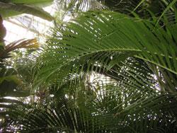 御苑の中の温室。結構大きいです。